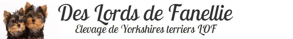 Elevage de Yorkshires terriers en Essonne